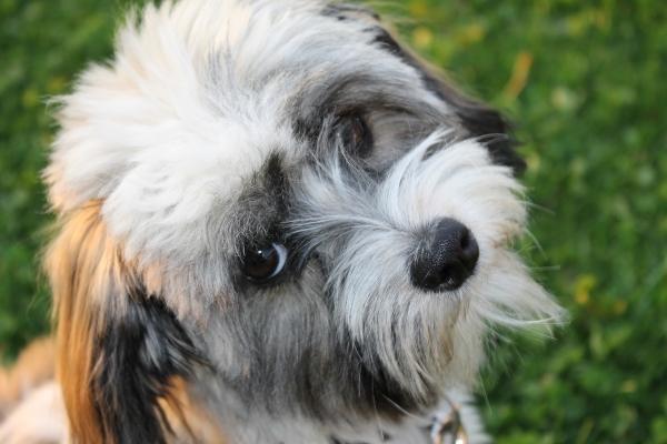 dog-929044_1920