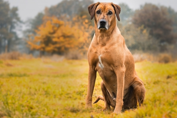 dog-2061187_1920