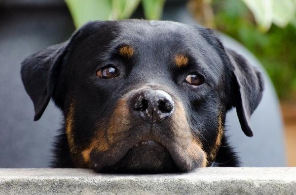 dog-218965_1280